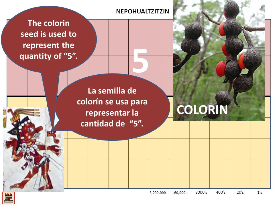 5 COLORIN The colorin seed is used to represent the quantity of 5 .