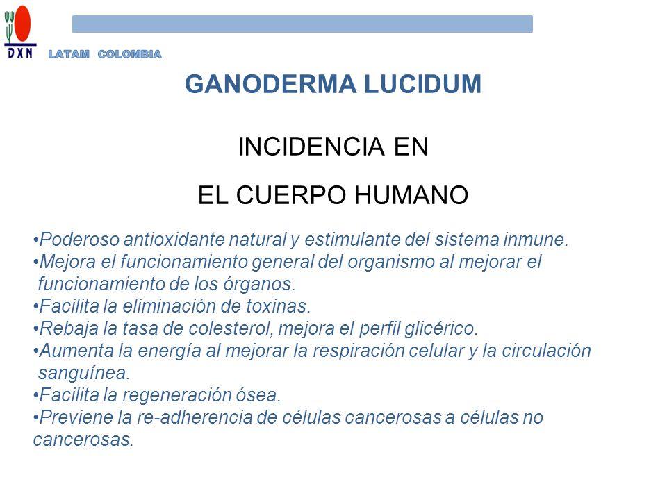 GANODERMA LUCIDUM INCIDENCIA EN EL CUERPO HUMANO