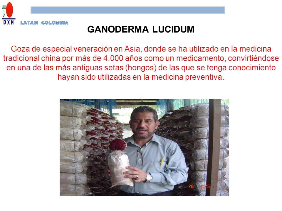 LATAM COLOMBIA GANODERMA LUCIDUM.
