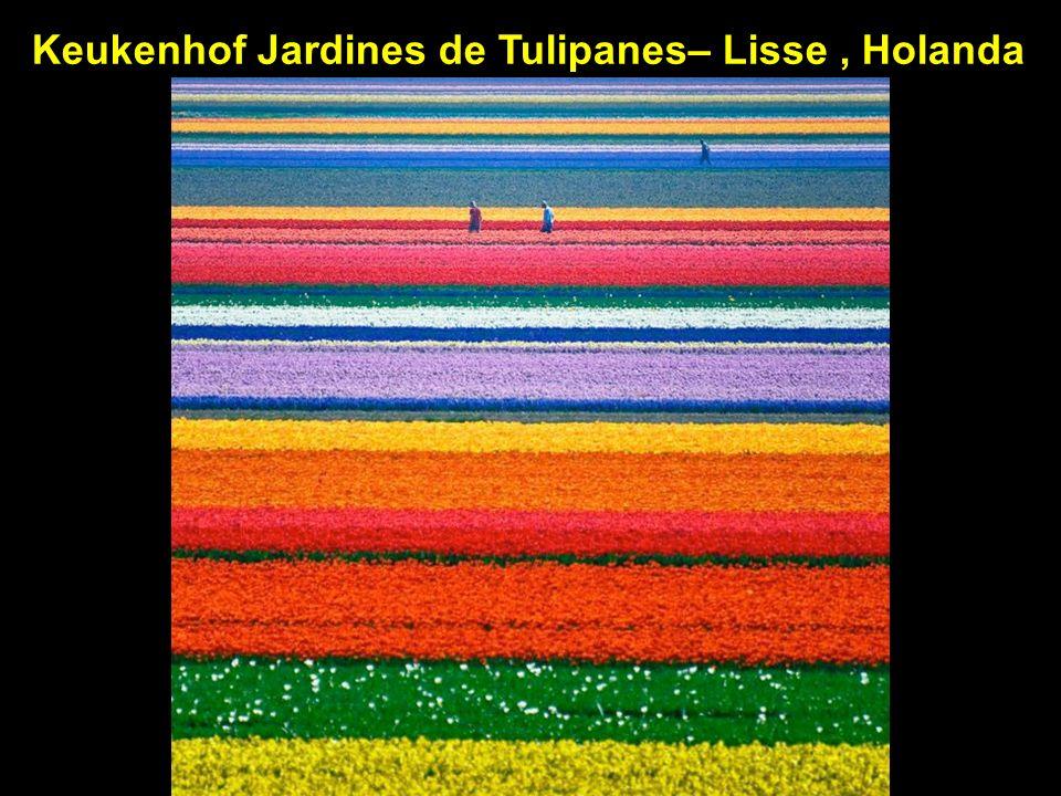 Keukenhof Jardines de Tulipanes– Lisse , Holanda