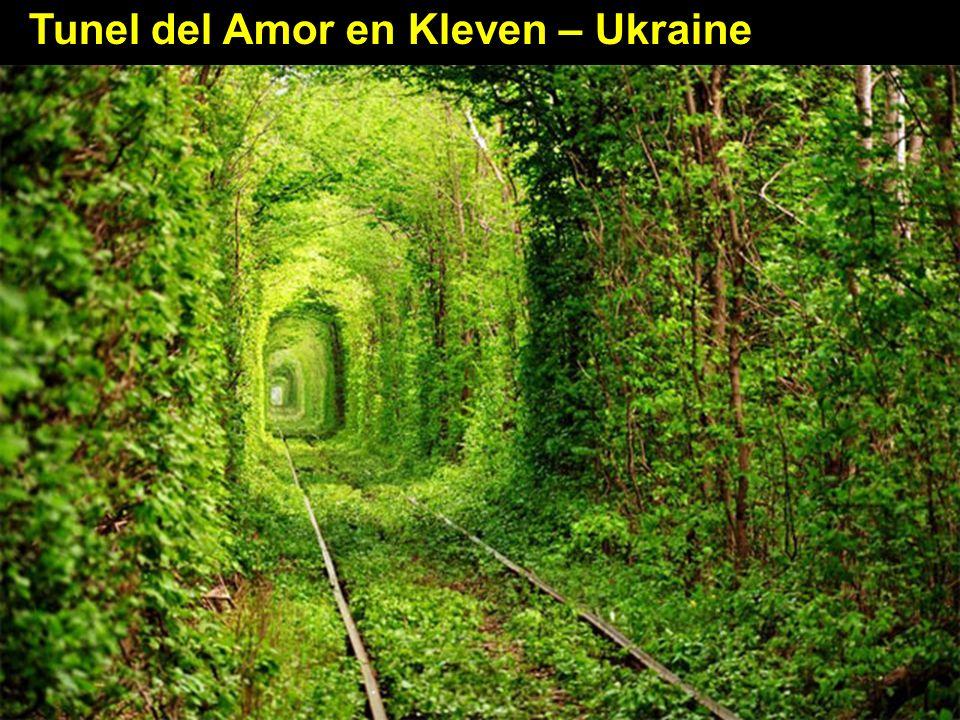 Tunel del Amor en Kleven – Ukraine