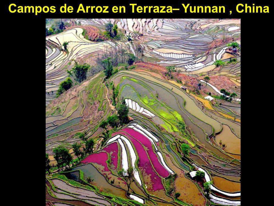 Campos de Arroz en Terraza– Yunnan , China