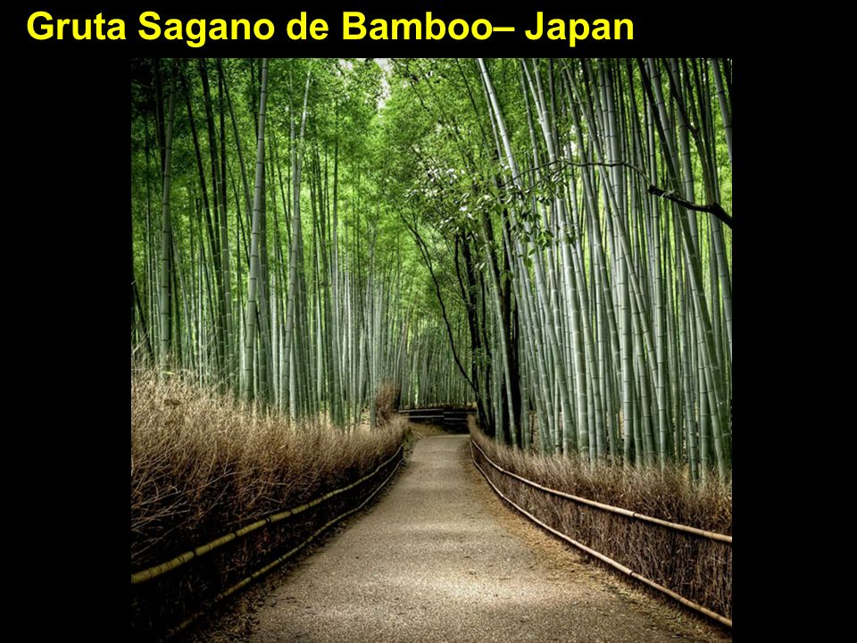 Gruta Sagano de Bamboo– Japan