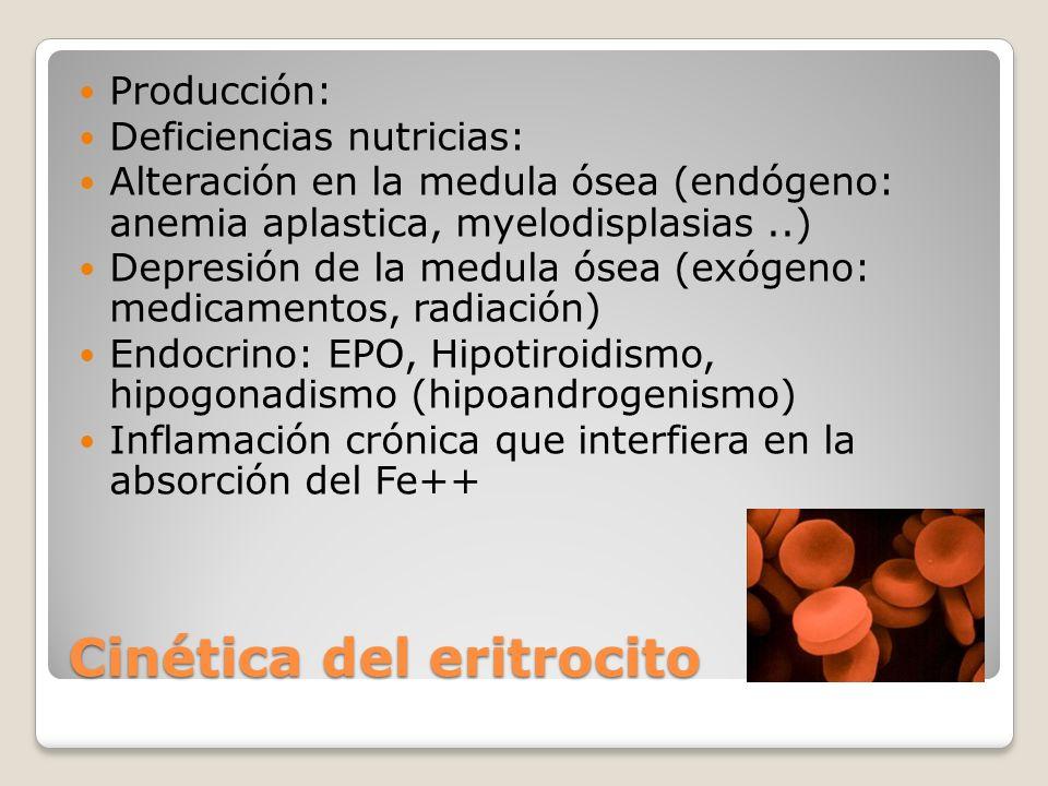 Cinética del eritrocito