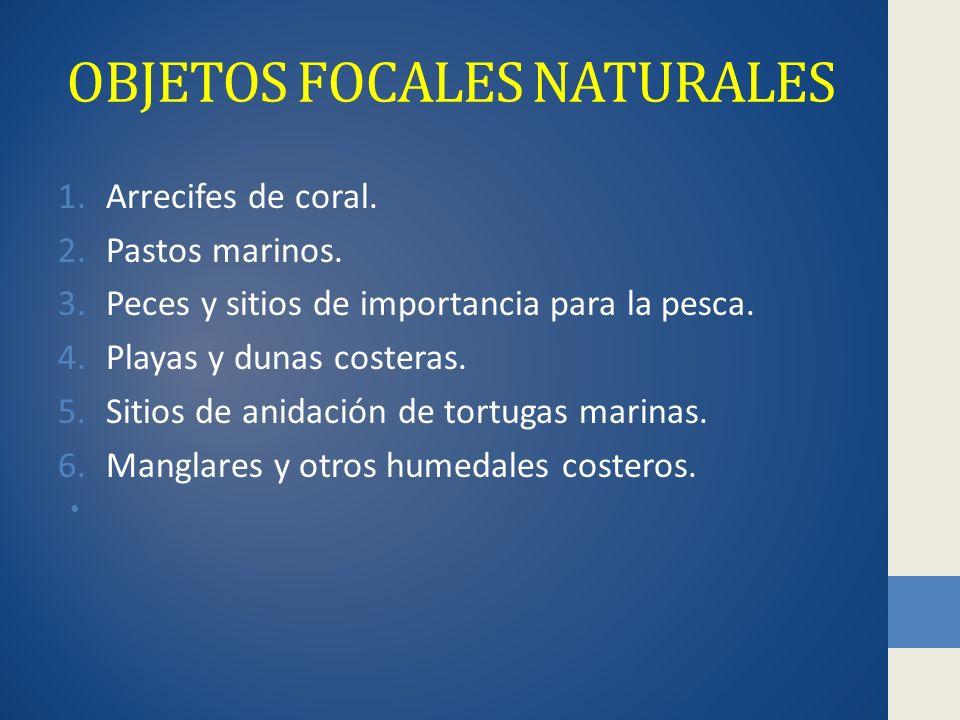 OBJETOS FOCALES NATURALES