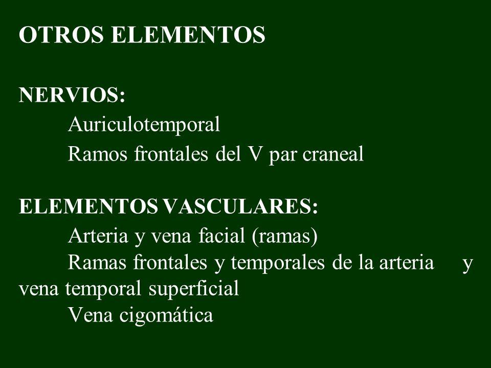 OTROS ELEMENTOS NERVIOS:. Auriculotemporal