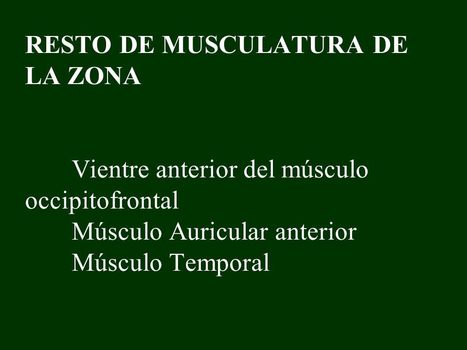 RESTO DE MUSCULATURA DE LA ZONA