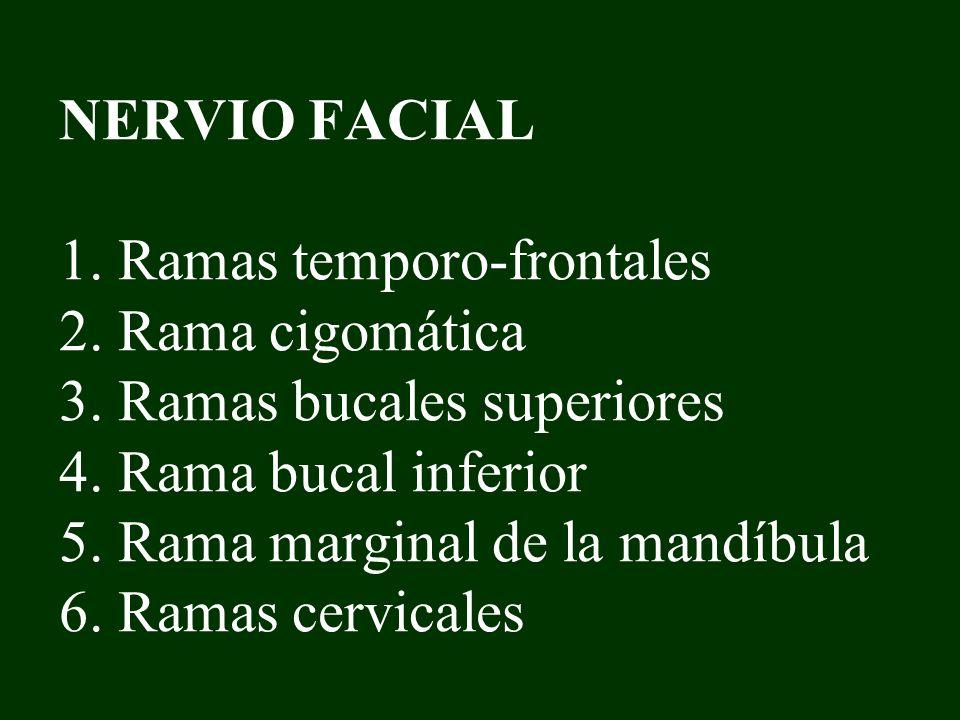 NERVIO FACIAL 1. Ramas temporo-frontales 2. Rama cigomática 3