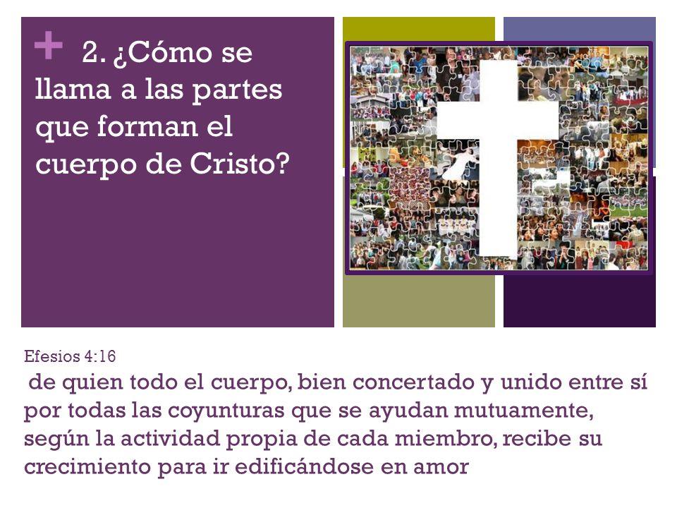 2. ¿Cómo se llama a las partes que forman el cuerpo de Cristo