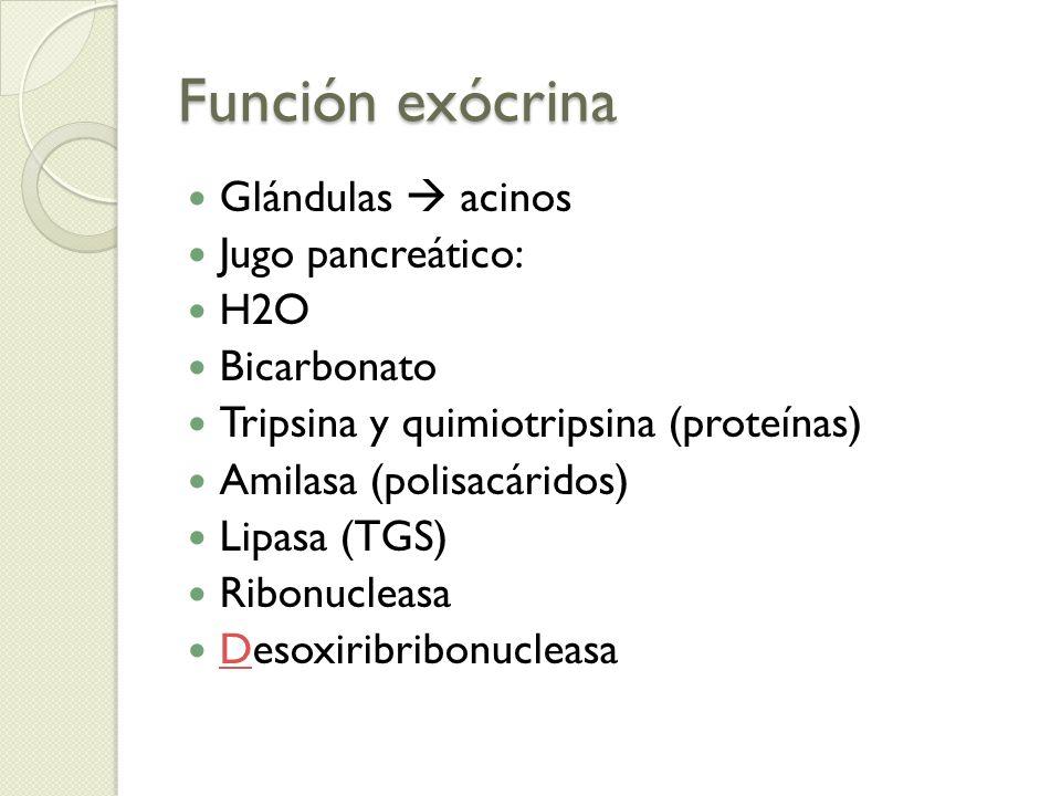 Función exócrina Glándulas  acinos Jugo pancreático: H2O Bicarbonato