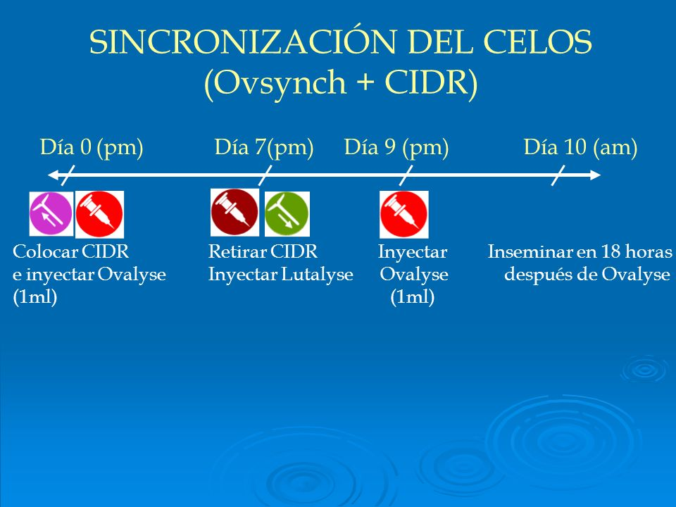SINCRONIZACIÓN DEL CELOS (Ovsynch + CIDR)