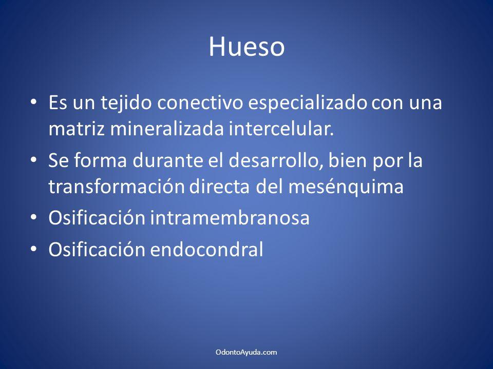 Hueso Es un tejido conectivo especializado con una matriz mineralizada intercelular.