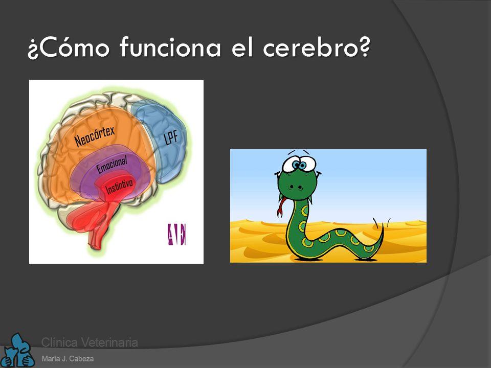 ¿Cómo funciona el cerebro