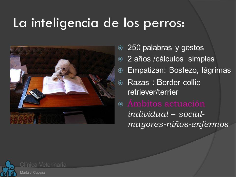 La inteligencia de los perros: