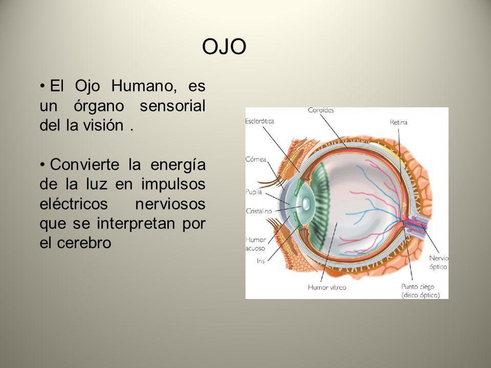 OJO El Ojo Humano, es un órgano sensorial del la visión .