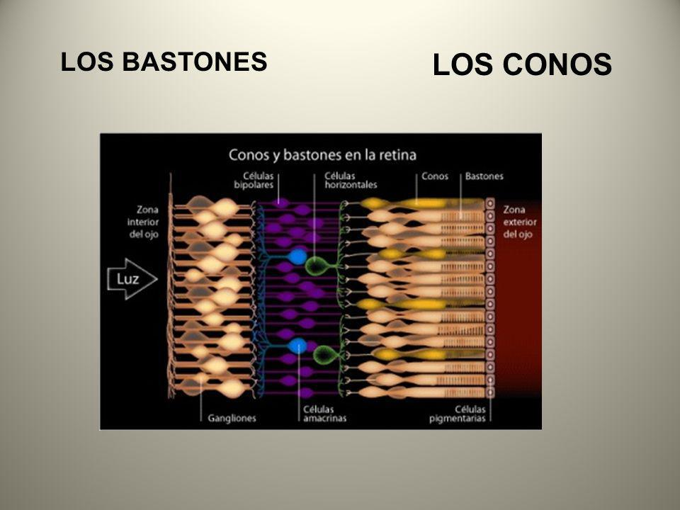LOS BASTONES LOS CONOS