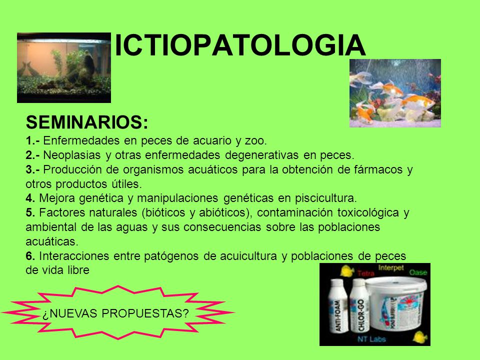 ICTIOPATOLOGIA SEMINARIOS: 1.- Enfermedades en peces de acuario y zoo.