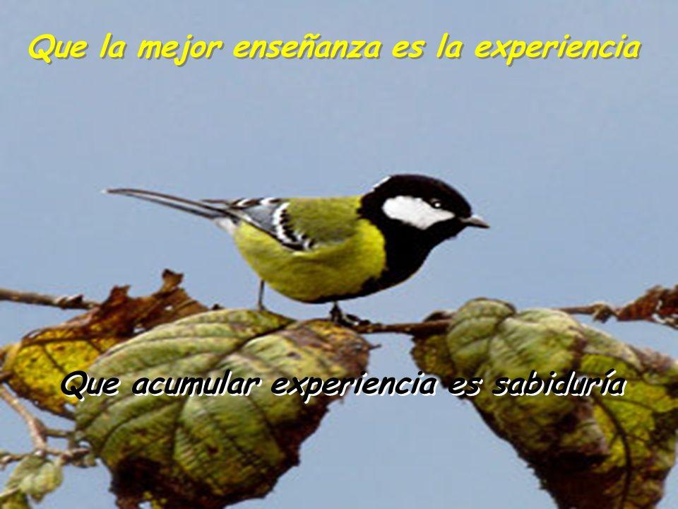 Que la mejor enseñanza es la experiencia
