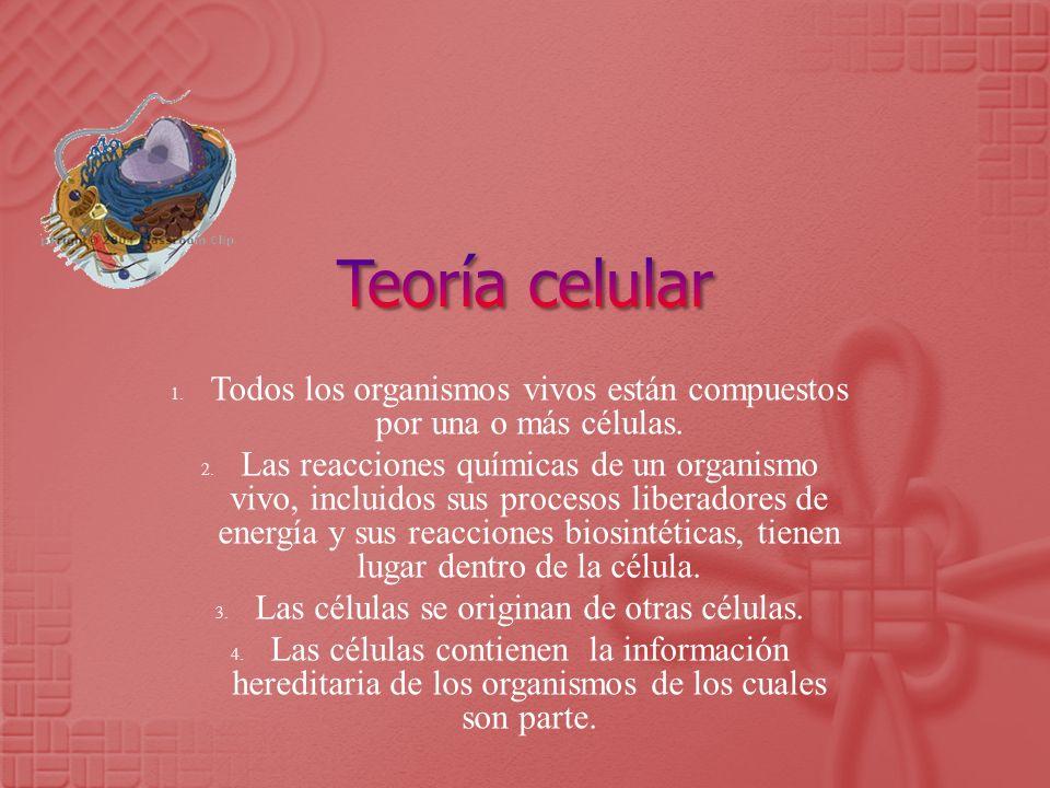 Teoría celular Todos los organismos vivos están compuestos por una o más células.