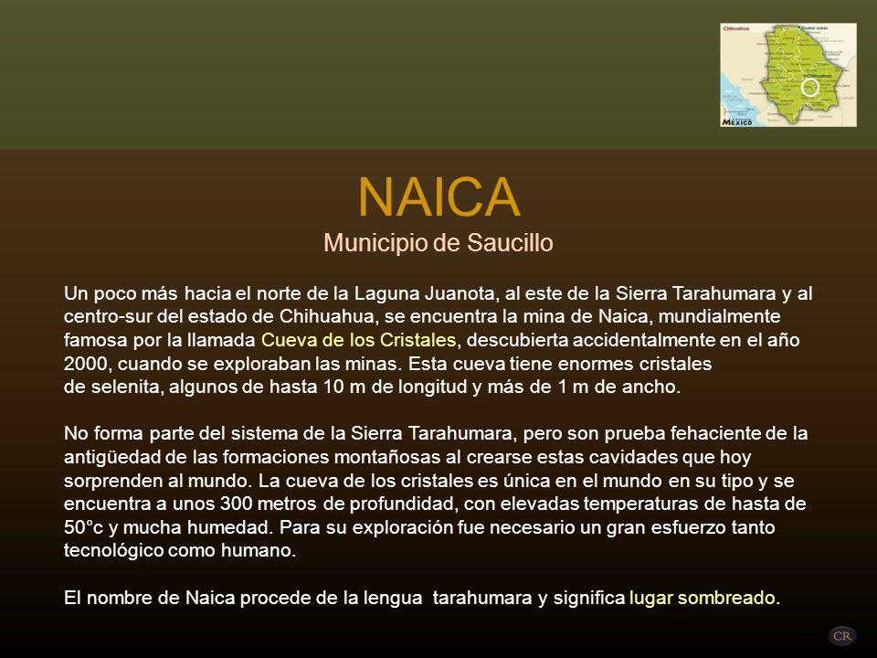 NAICA Municipio de Saucillo