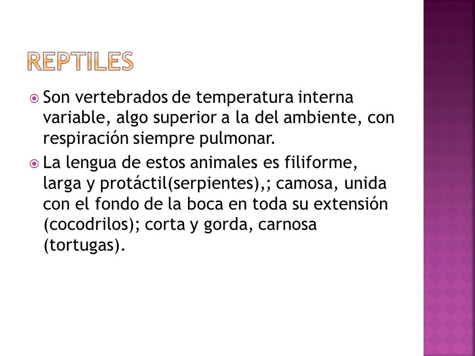 REPTILES Son vertebrados de temperatura interna variable, algo superior a la del ambiente, con respiración siempre pulmonar.