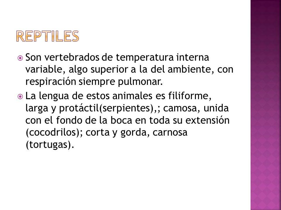REPTILESSon vertebrados de temperatura interna variable, algo superior a la del ambiente, con respiración siempre pulmonar.