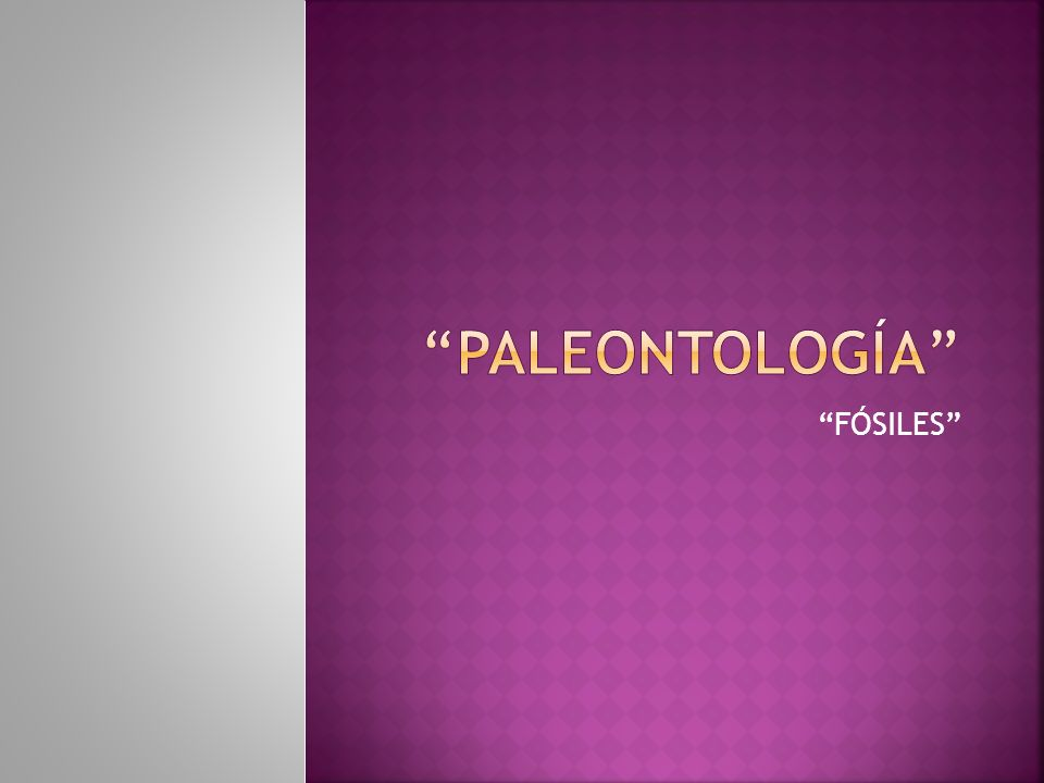 PALEONTOLOGÍA FÓSILES