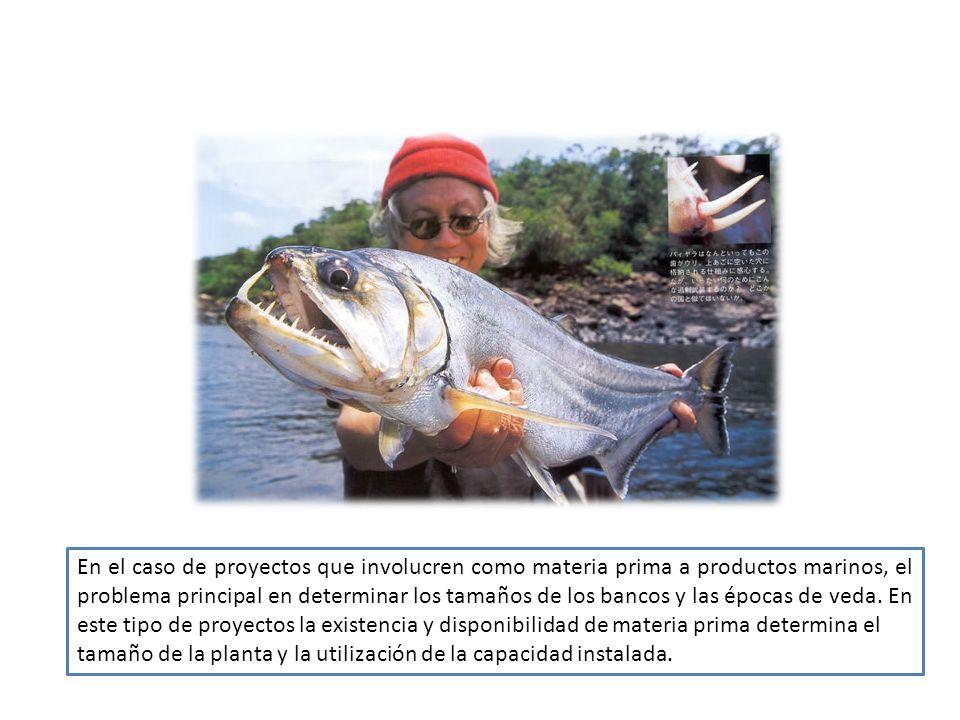 En el caso de proyectos que involucren como materia prima a productos marinos, el problema principal en determinar los tamaños de los bancos y las épocas de veda. En este tipo de proyectos la existencia y disponibilidad de materia prima determina el