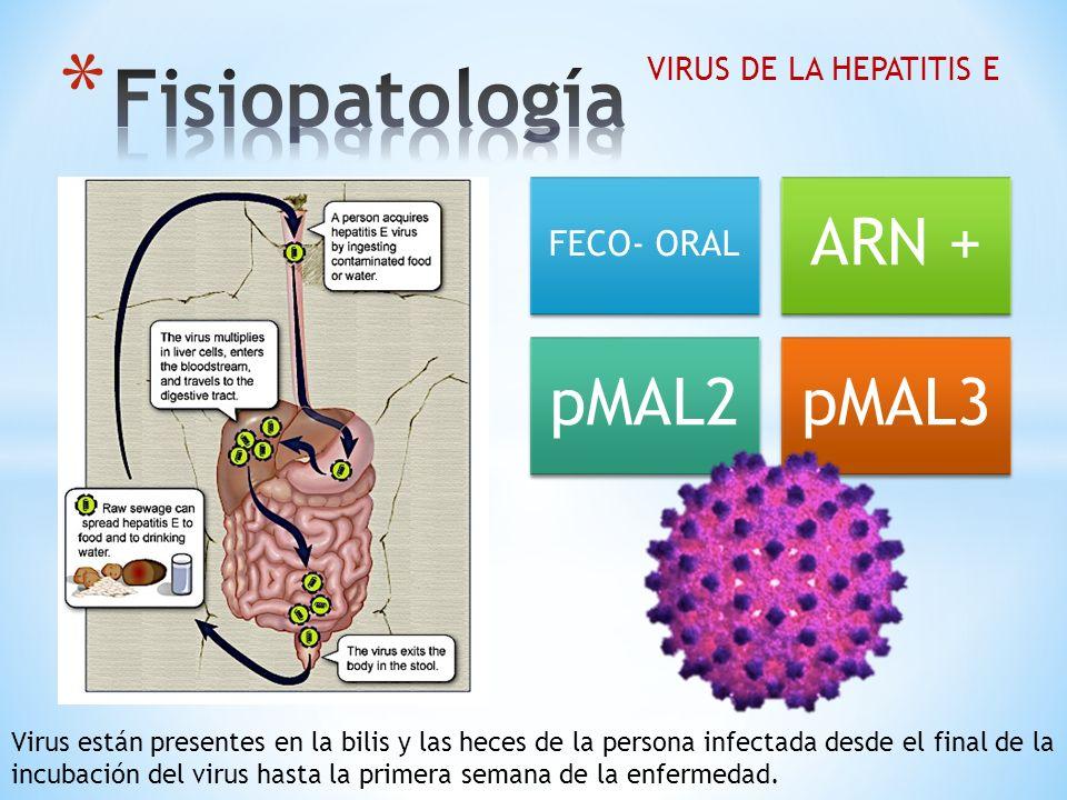 Fisiopatología ARN + pMAL2 pMAL3 FECO- ORAL VIRUS DE LA HEPATITIS E