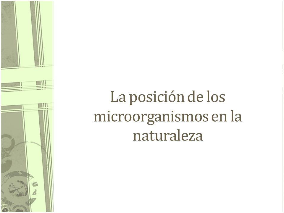 La posición de los microorganismos en la naturaleza