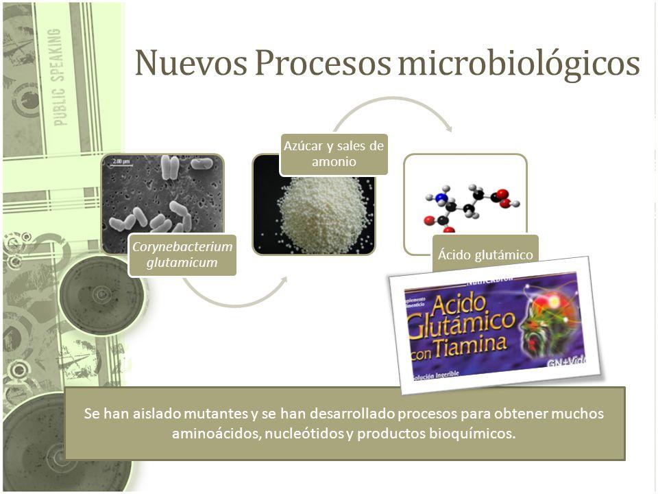Nuevos Procesos microbiológicos