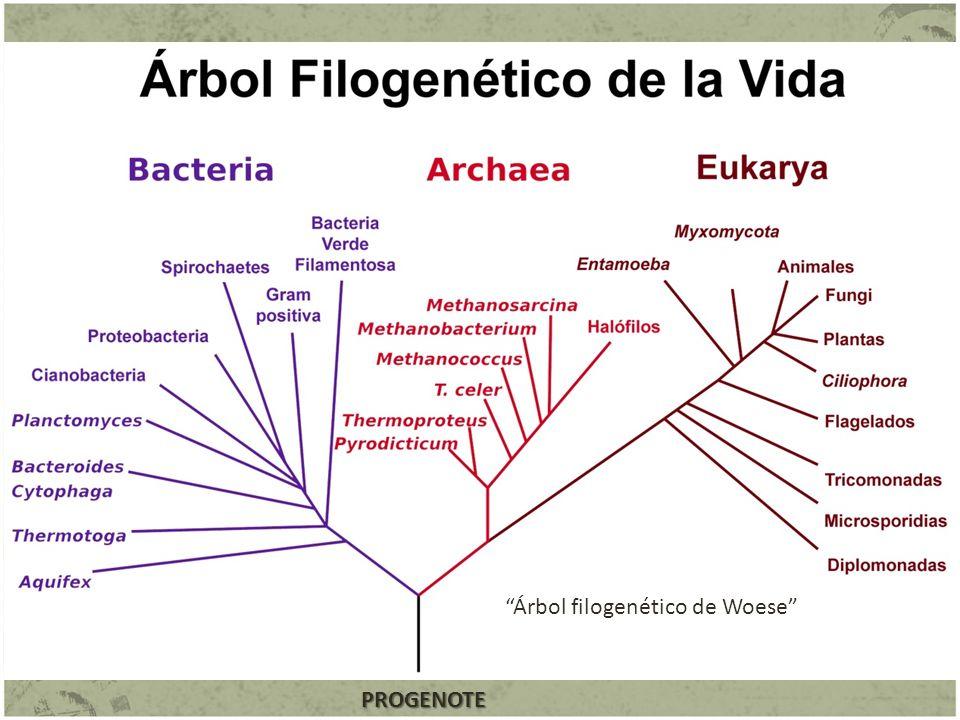 Árbol filogenético de Woese