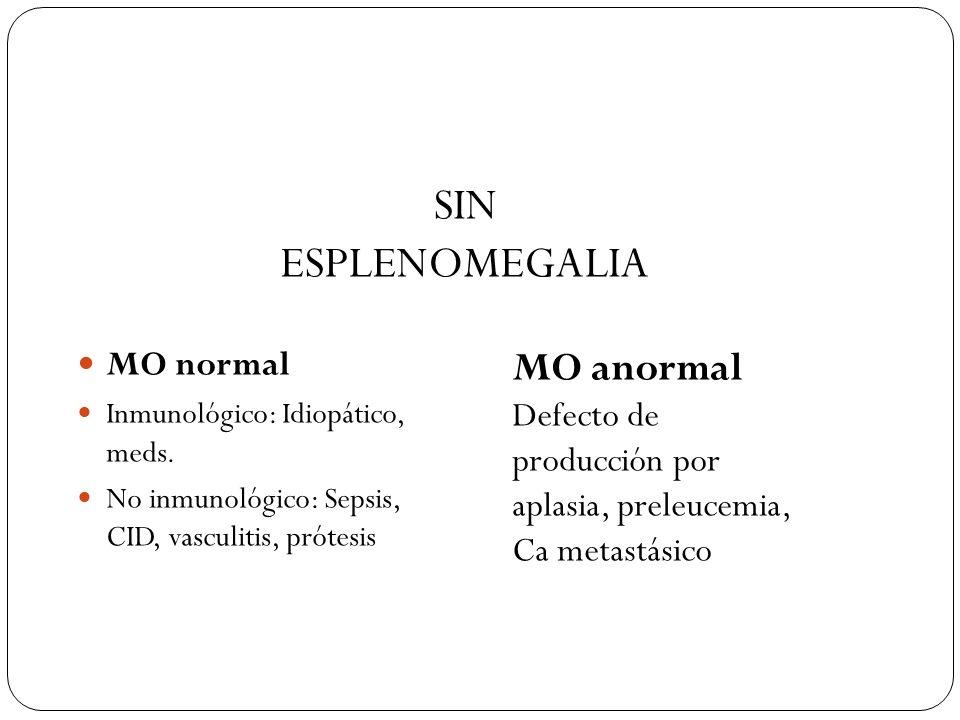 SIN ESPLENOMEGALIA MO anormal MO normal