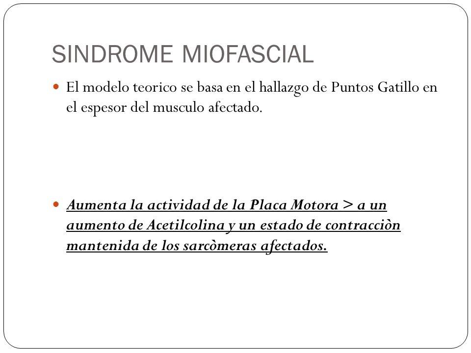 SINDROME MIOFASCIAL El modelo teorico se basa en el hallazgo de Puntos Gatillo en el espesor del musculo afectado.