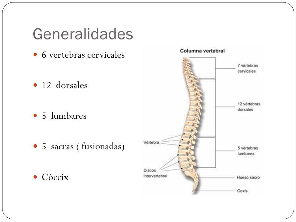 Generalidades 6 vertebras cervicales 12 dorsales 5 lumbares