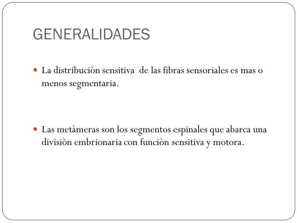GENERALIDADES La distribuciòn sensitiva de las fibras sensoriales es mas o menos segmentaria.