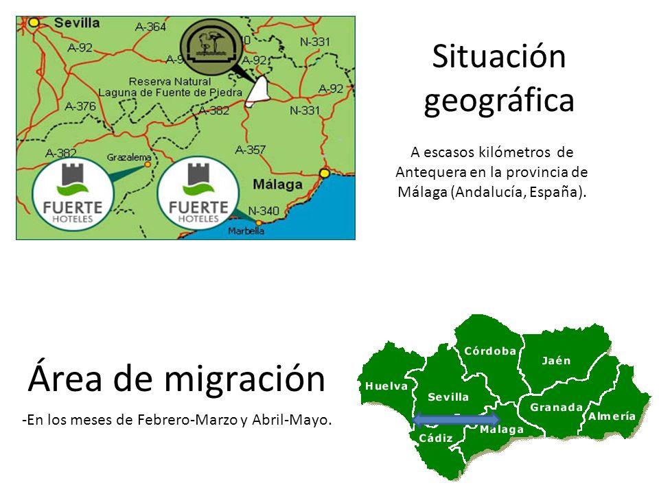 Área de migración Situación geográfica