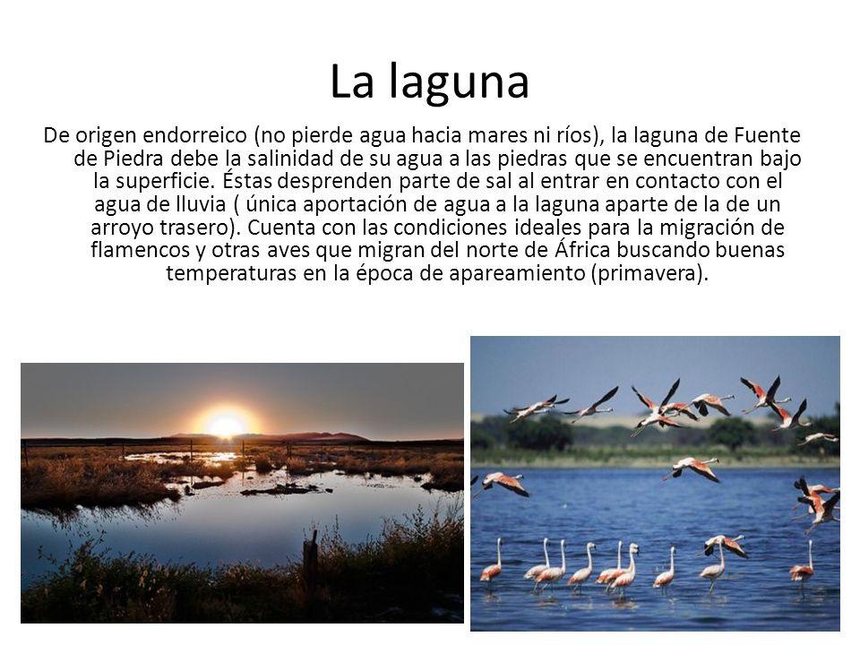La laguna