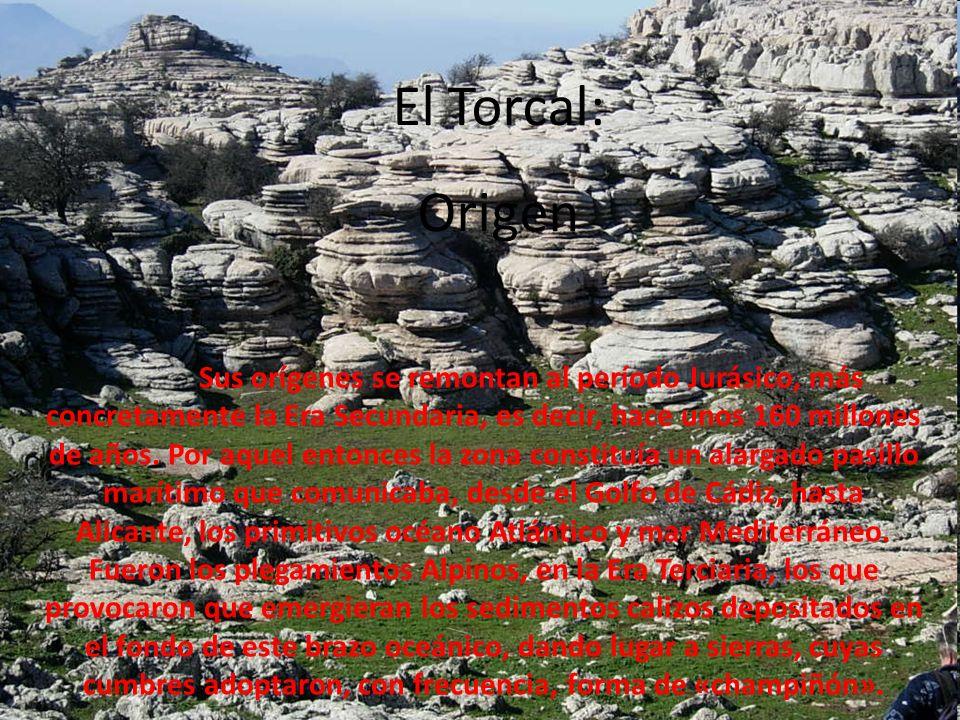 El Torcal: Origen.