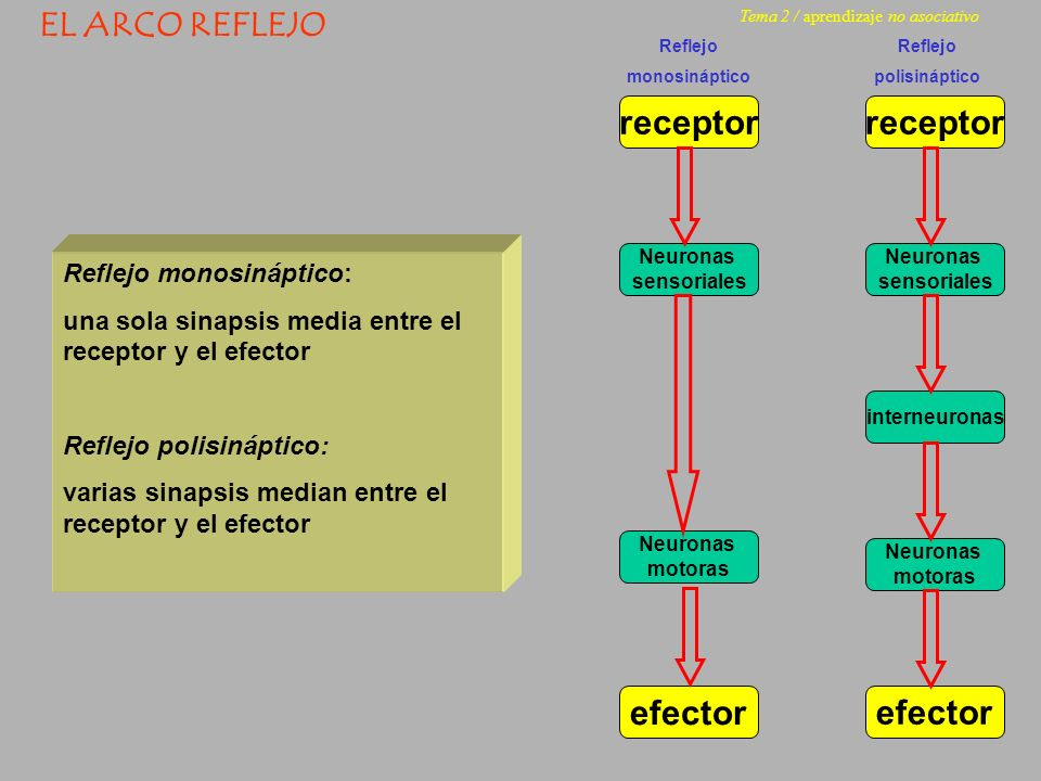 receptor receptor efector efector