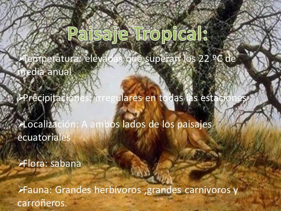 Paisaje Tropical: Temperatura: elevadas que superan los 22 ºC de media anual. Precipitaciones: irregulares en todas las estaciones.