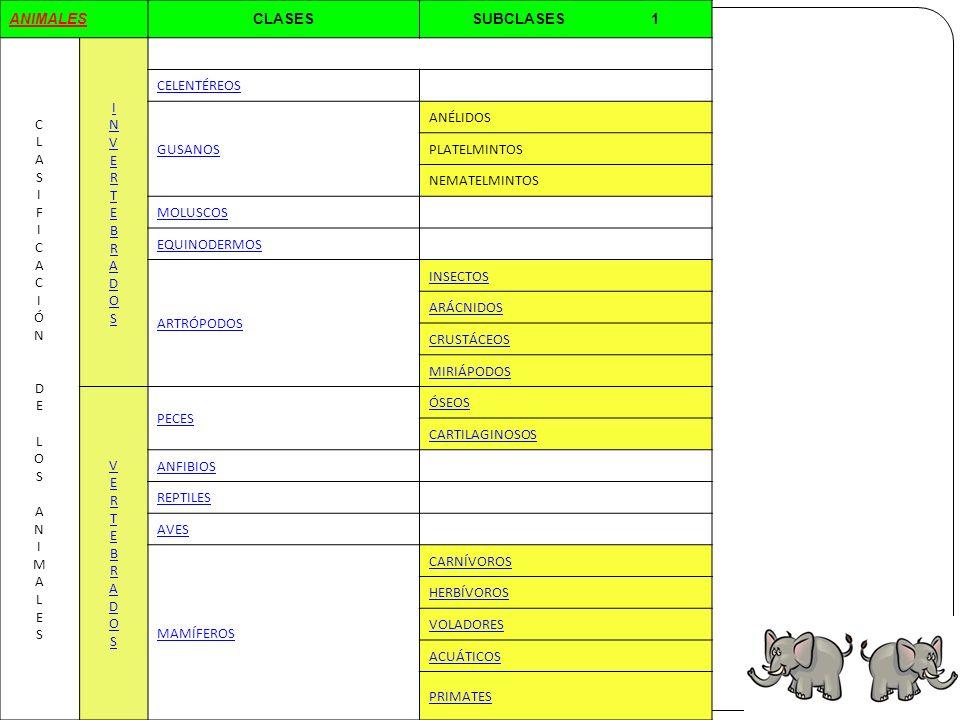 ANIMALES CLASES SUBCLASES 1 C L A S I F Ó N D E O M
