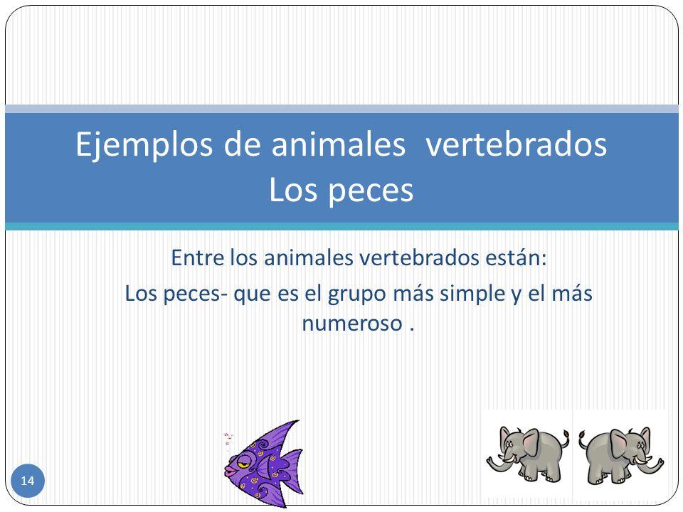 Ejemplos de animales vertebrados Los peces