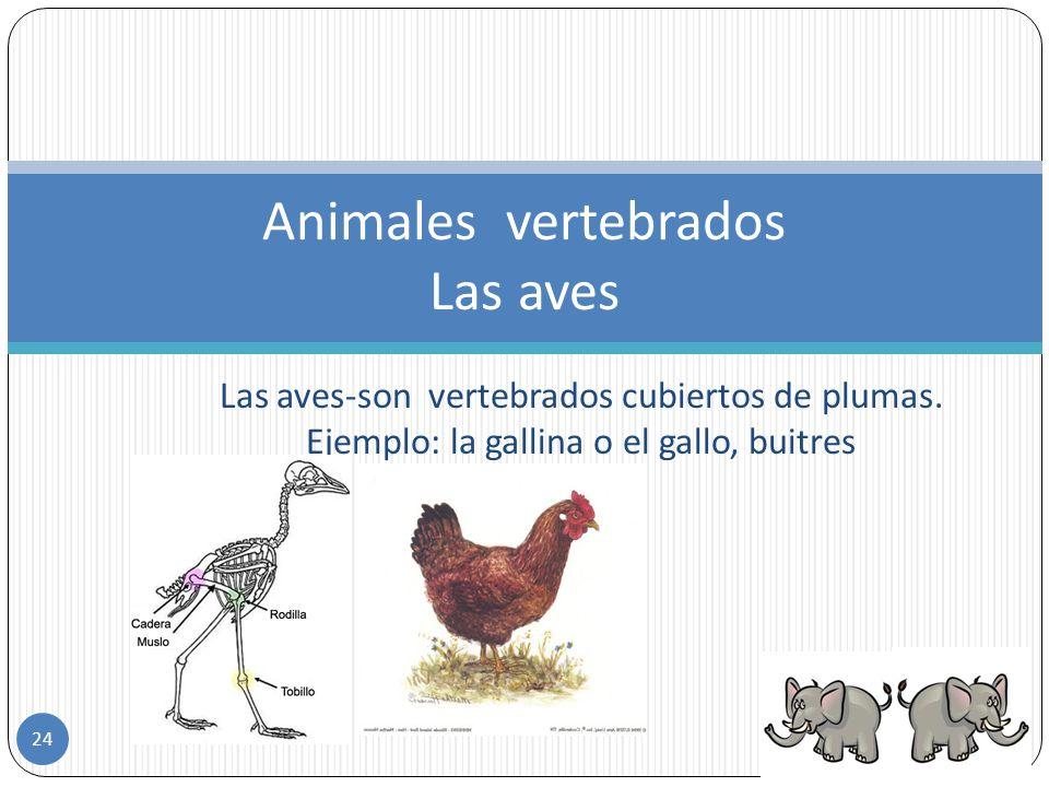 Animales vertebrados Las aves