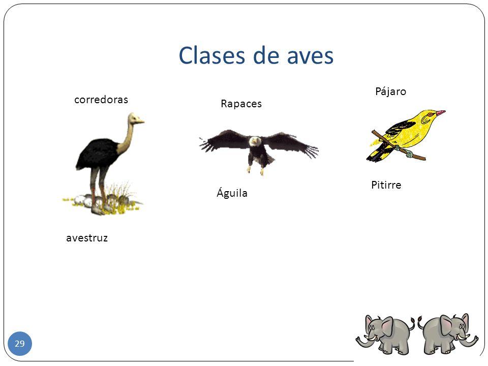 Clases de aves Pájaro corredoras Rapaces Pitirre Águila avestruz
