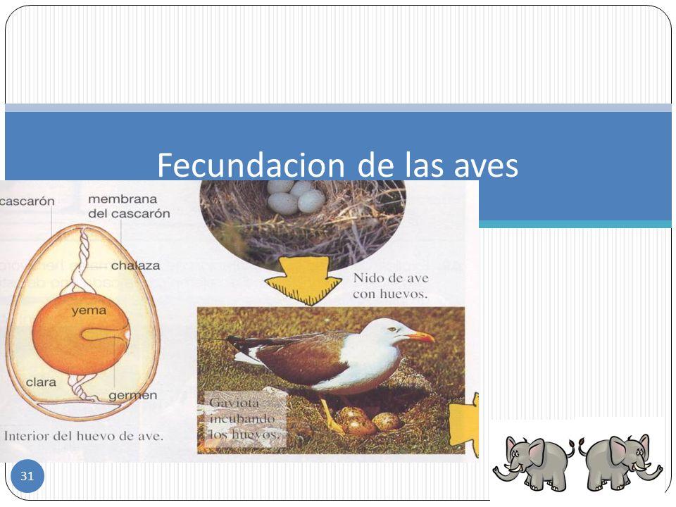 Fecundacion de las aves
