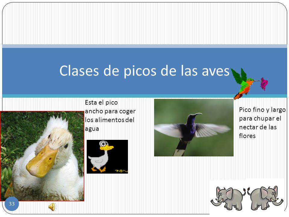 Clases de picos de las aves