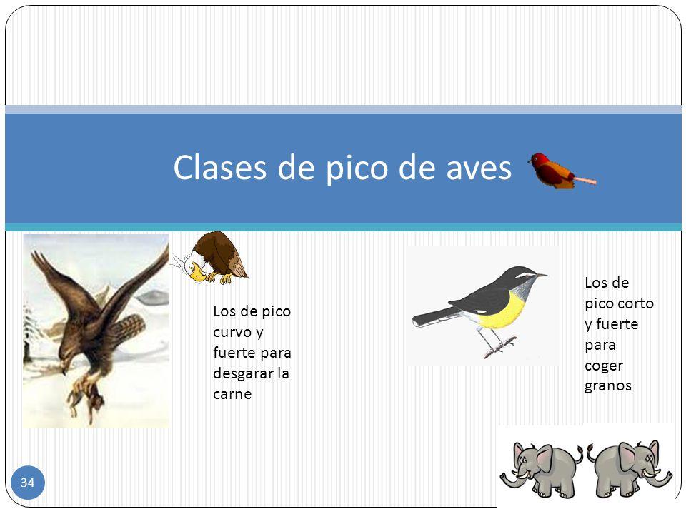 Clases de pico de aves Los de pico corto y fuerte para coger granos