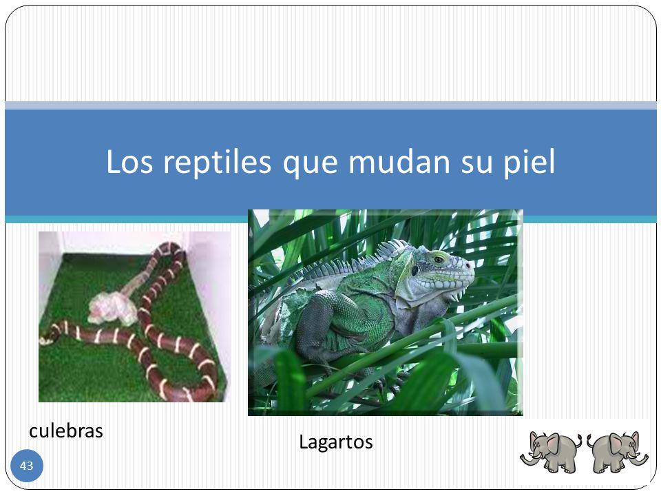 Los reptiles que mudan su piel