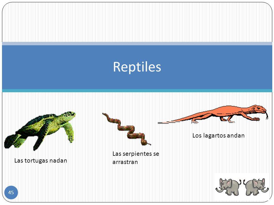Reptiles Los lagartos andan Las serpientes se arrastran